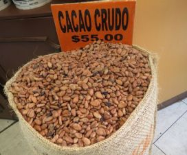 Cacao Crudo de Oaxaca