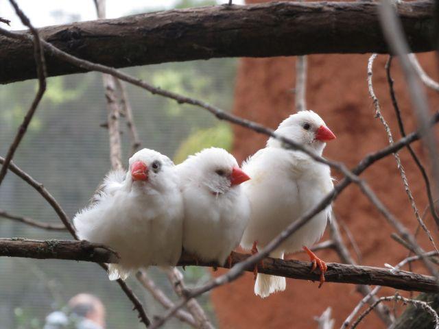 Africam Safari Aviario Australiano Puebla