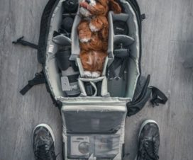 Accesorios que no debes olvidar si viajas con mascotas