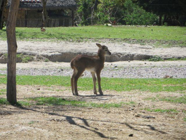 Animalitos que Enternecen Africam Safari Puebla