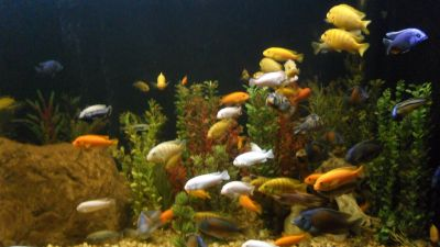 Aquarium El Acuario de Puebla