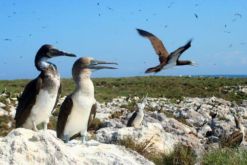 Aves Islas Marietas