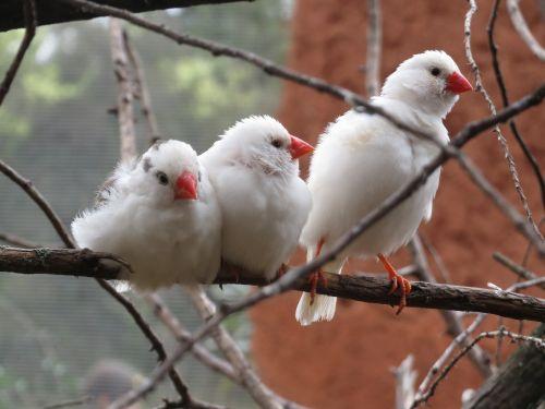 Aviario Australiano Africam Safari Puebla