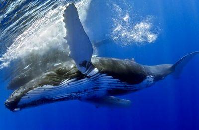 Avistamiento de Ballenas en Los Cabos 2014