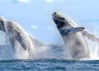 Avistamiento de Ballenas en Los Cabos 2016