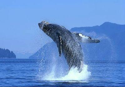 Ballenas en Los Cabos
