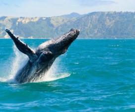 Temporada de Ballenas Los Cabos 2015
