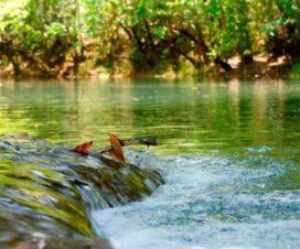Balneario Los Reyes Chetumal Quintana Roo