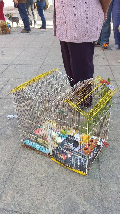 Bendición de Mascotas San Antonio Abad 5
