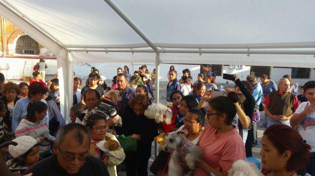 Bendición de Mascotas San Antonio Abad 6