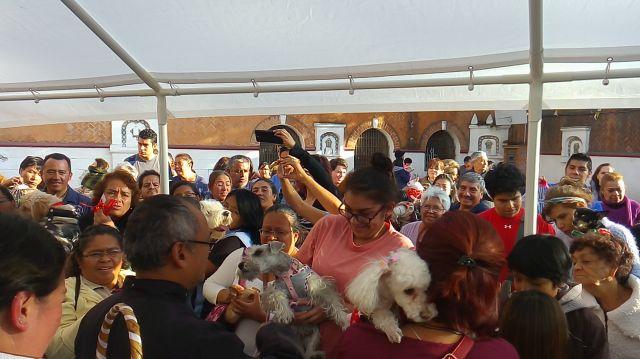 Bendición de Mascotas San Antonio Abad 9