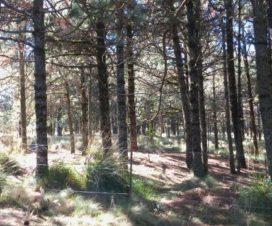 Bosque del Parque Nacional Izta Popo