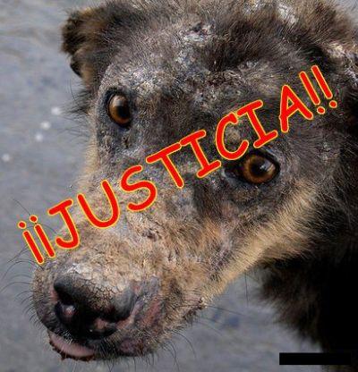 [Imagenes]Imagenes de Maltrato de Animales !!