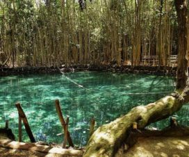 Cenote El Corchito Progreso Yucatán