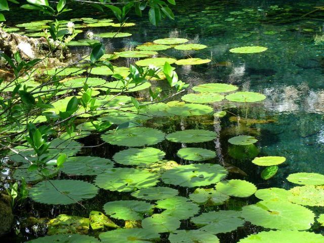 Cenote Nicté Ha Tulum Quintana Roo