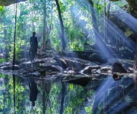 Cenote Ta'ak bil-Ha Puerto Aventuras Quintana Roo