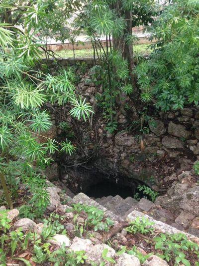Cenote Zazil Há Cholul Mérida Yucatán