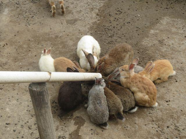 Conejos Comiendo en el Parque Loro Puebla