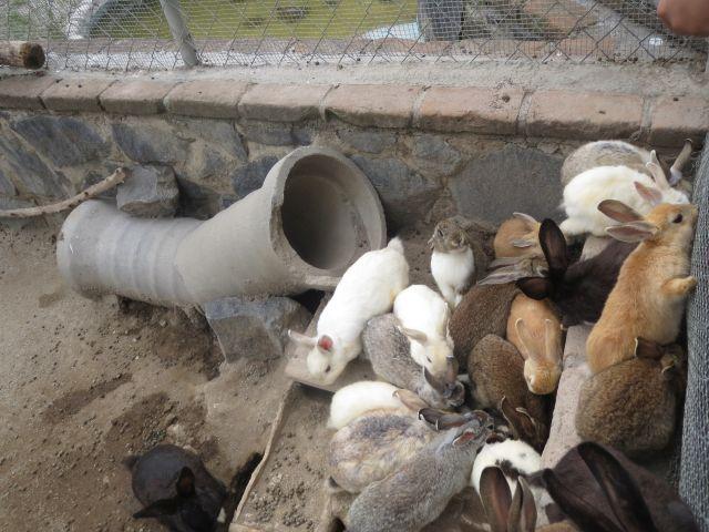 Conejos en el Parque Loro Puebla