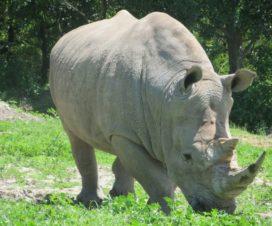 Africam Safari Una Aventura de Ensueño