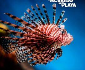 El Acuario de Playa del Carmen Un Mundo de Diversión