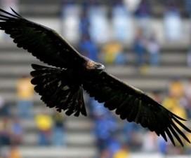 El Águila del América