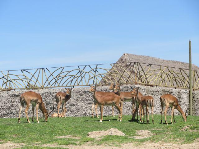El Amor hacía la Naturaleza Africam Safari Puebla