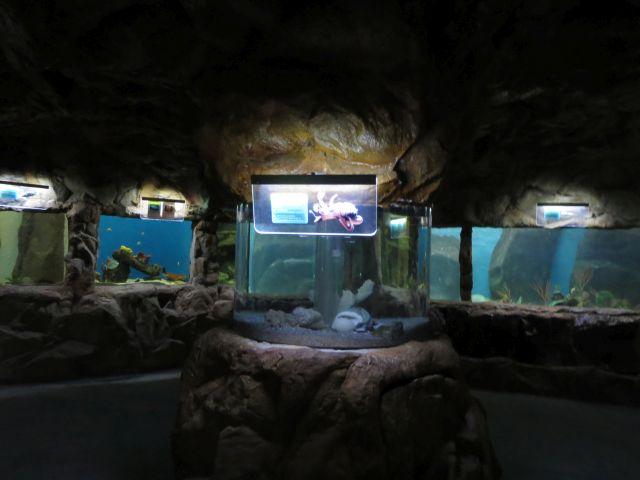 El Hermoso Acuario de Mazatlán 2