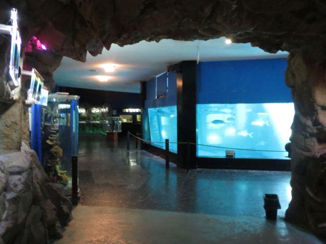 El Hermoso Acuario de Mazatlán 4