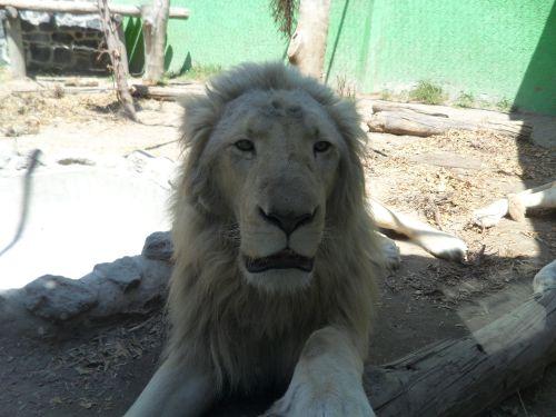 El Rey de la Selva Parque Loro Puebla
