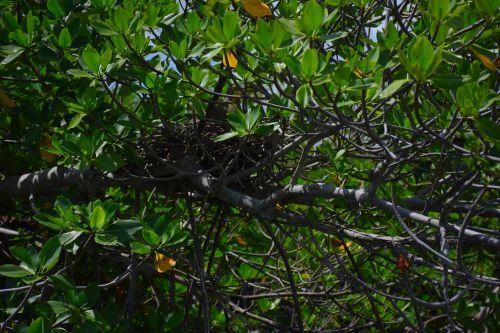 Experiencia en el Manglar de Cancún Parque Maya Tours Cancún