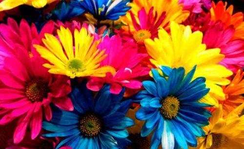 Flores Para dar ánimos