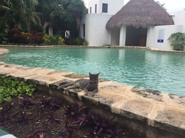 Hotel Amarte Maroma Playa del Carmen Pet Friendly