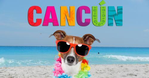 Hoteles Pet Friendly en Cancún
