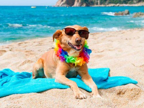 Hoteles Pet Friendly en Playa del Carmen