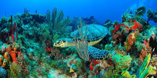 Isla Mujeres Cancún