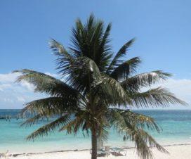 La Belleza de Puerto Morelos