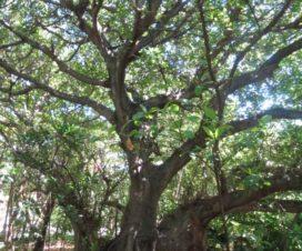 La Maravilla de la Naturaleza Zona Arqueológica de San Miguelito Cancún