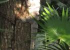 Las Iguanas de Tulum Riviera Maya