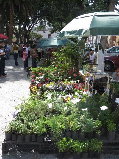 Las Tradicionales Flores de Atlixco Puebla
