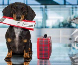 Lo que debes tener en cuenta si viajas con mascotas