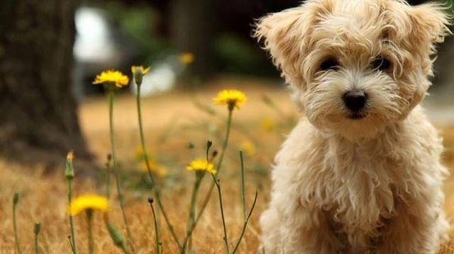 Los Beneficios de la Esterilización para las Mascotas