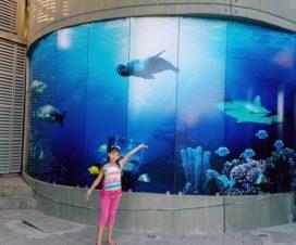 Lugares para Visitar en Mazatlán con Niños