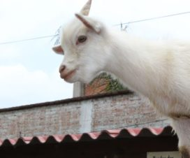 Zoo Parque Loro Puebla