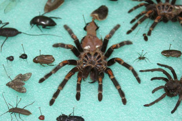 Museo Bichos e Insectos Querétaro