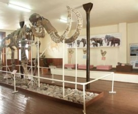 Museo del Mamut Chihuahua