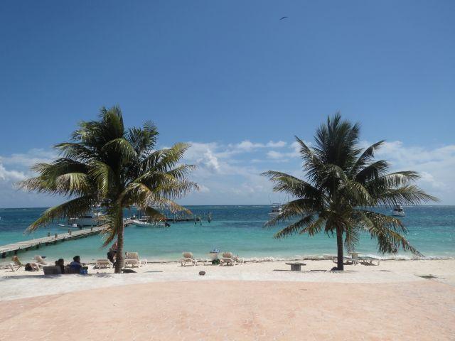 Palmeras en Puerto Morelos
