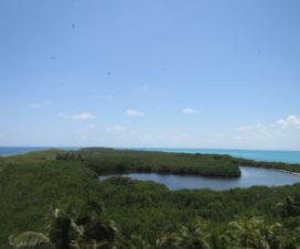 Parque Nacional Isla Contoy Laguna Pajarera Central