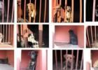 Perros de Iztapalapa