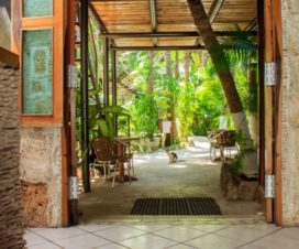 Pet Friendly Hotel Playa del Karma Playa del Carmen
